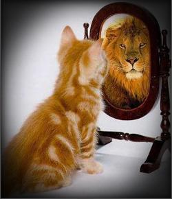 kitten-lion